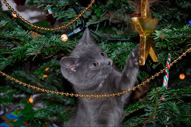 Кошки (Cats) - Страница 4 7126106_m