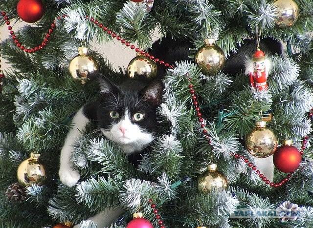 Кошки (Cats) - Страница 4 7126111_m