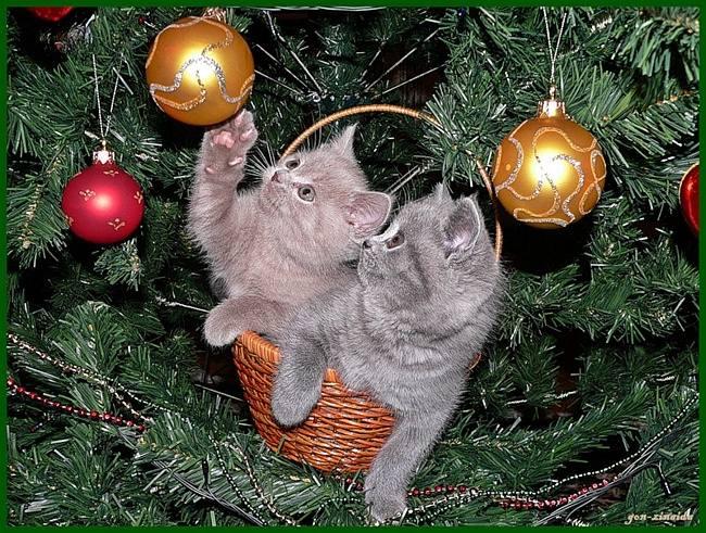 Кошки (Cats) - Страница 4 7126107_m