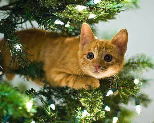Кошки (Cats) - Страница 4 7126116_m