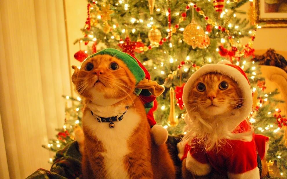 Кошки (Cats) - Страница 4 7126117_m