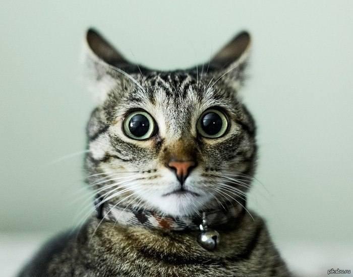 Кошки (Cats) - Страница 4 7128364_m