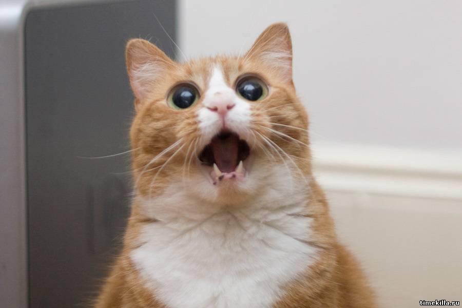 Кошки (Cats) - Страница 4 7128363_m