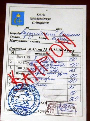 Клуб кролиководів Сумщини - Страница 2 7219487_m