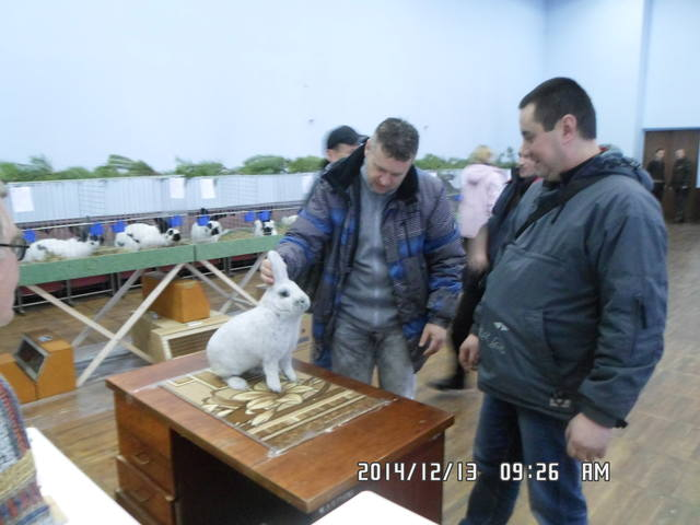 Клуб кролиководів Сумщини - Страница 3 7227678_m