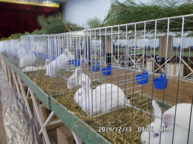 Клуб кролиководів Сумщини - Страница 3 7227697_m