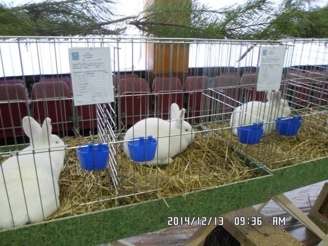 Клуб кролиководів Сумщини - Страница 3 7227714_m