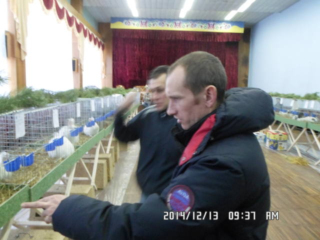 Клуб кролиководів Сумщини - Страница 3 7227719_m