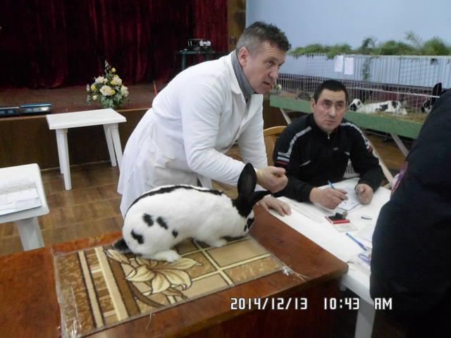 Клуб кролиководів Сумщини - Страница 3 7227786_m