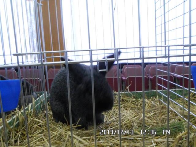 Клуб кролиководів Сумщини - Страница 3 7227847_m