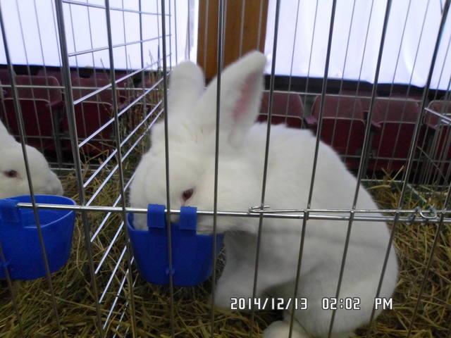 Клуб кролиководів Сумщини - Страница 3 7230981_m