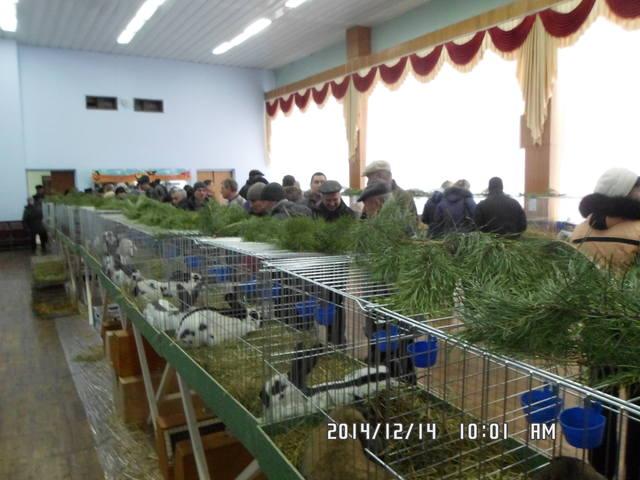 Клуб кролиководів Сумщини - Страница 3 7231014_m