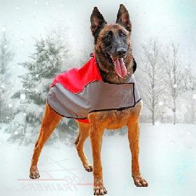 Зимой одежда собакам необходима!