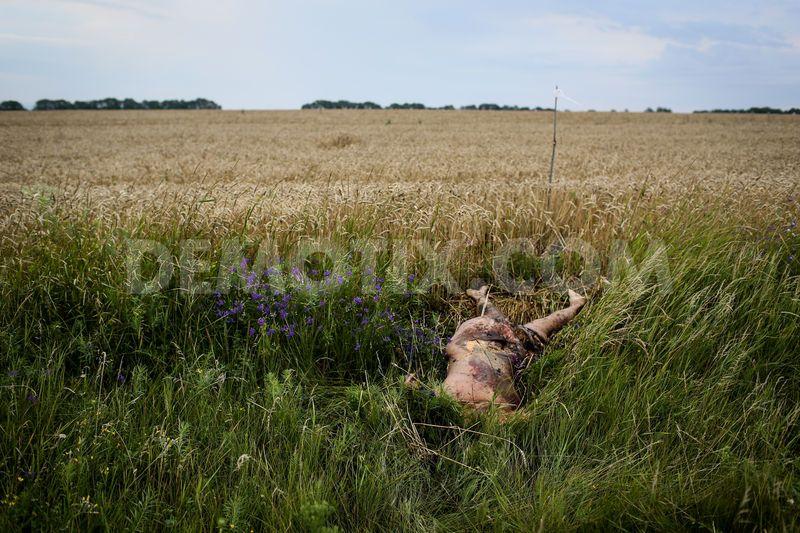 http://images.vfl.ru/ii/1419168869/144a9a58/7269922.jpg