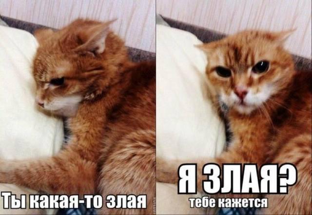 http://images.vfl.ru/ii/1419183745/0eb63464/7272531_m.jpg