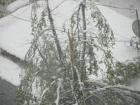 http://images.vfl.ru/ii/1492757176/b852d794/16937538_s.jpg