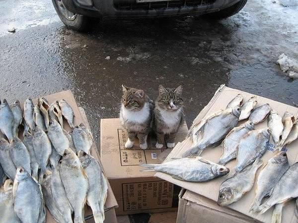 http://images.vfl.ru/ii/1492948708/6704a9d4/16967033_m.jpg