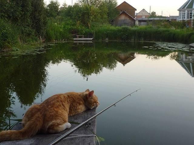 http://images.vfl.ru/ii/1493110596/10e768e0/16990713_m.jpg