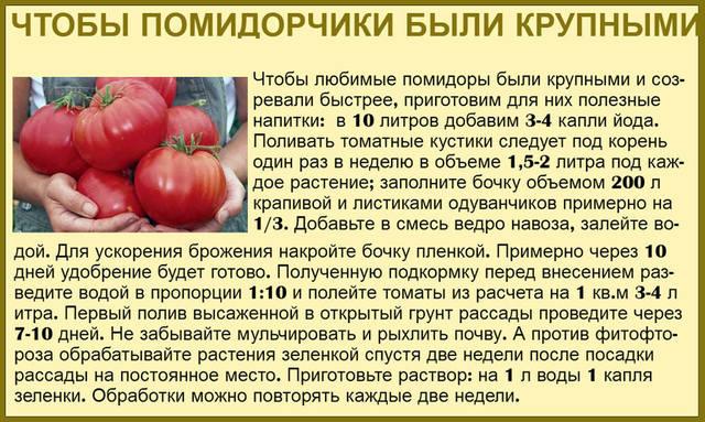 Кальций - удобрение для помидор
