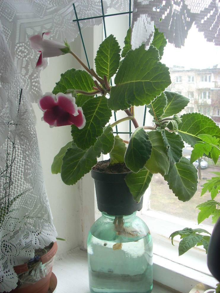 http://images.vfl.ru/ii/1493294559/e329e76c/17018780_m.jpg