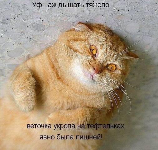 http://images.vfl.ru/ii/1493455385/14010c26/17039491_m.jpg