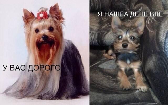 Купить Собаку Дешево