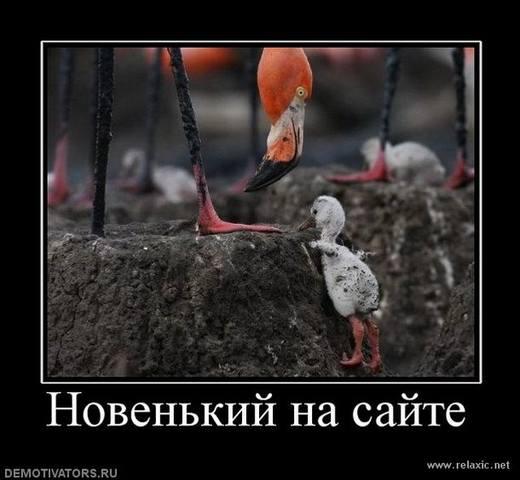 http://images.vfl.ru/ii/1493570426/0a0fabf4/17054790_m.jpg