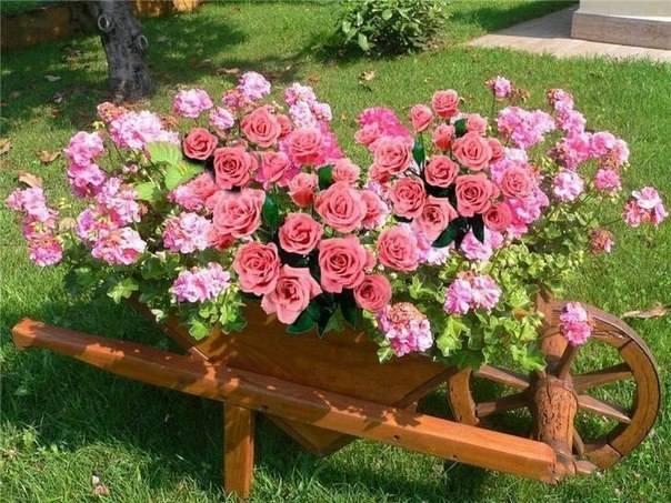 http://images.vfl.ru/ii/1493724917/07b8af8b/17076261_m.jpg