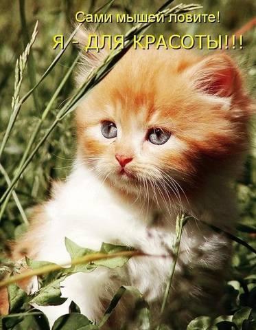 http://images.vfl.ru/ii/1493976808/2bc39a1c/17112211_m.jpg