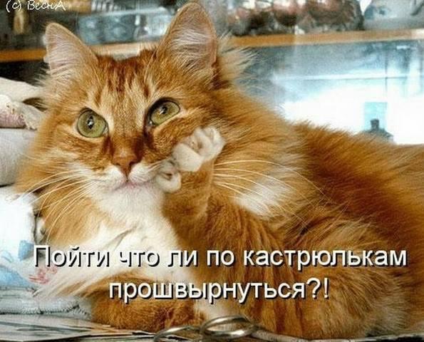 http://images.vfl.ru/ii/1493976858/886f025d/17112214_m.jpg