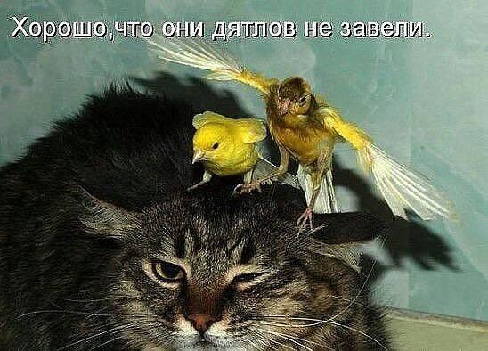http://images.vfl.ru/ii/1493976907/21e749fc/17112217_m.jpg