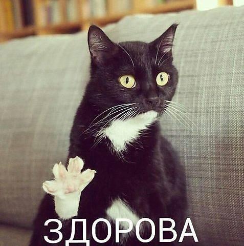 http://images.vfl.ru/ii/1493977032/00d5bed5/17112236_m.jpg
