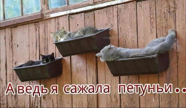 http://images.vfl.ru/ii/1493977116/6e9f724f/17112244_m.jpg