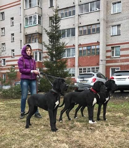 http://images.vfl.ru/ii/1494267494/b7478586/17151642_m.jpg