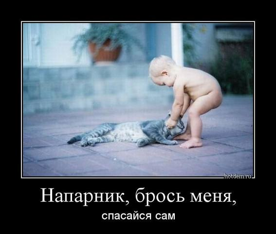 http://images.vfl.ru/ii/1494457277/15328b81/17179369_m.jpg