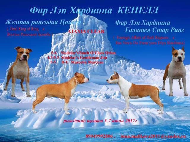 http://images.vfl.ru/ii/1494497297/ae268514/17183474_m.jpg