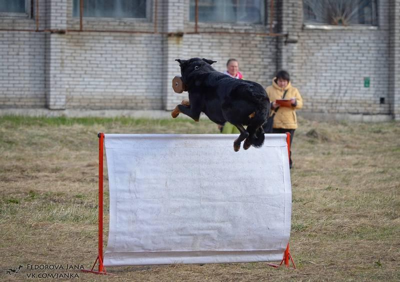 http://images.vfl.ru/ii/1494822861/678e2018/17228967_m.jpg