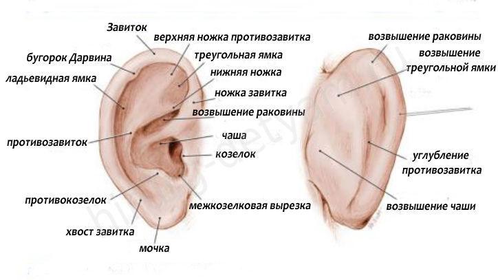 http://images.vfl.ru/ii/1495101857/d025a187/17266354.jpg