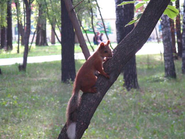 http://images.vfl.ru/ii/1495361189/d265651c/17297429_m.jpg