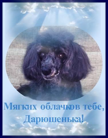 Дарюша готова подарить любовь. 17306479_m