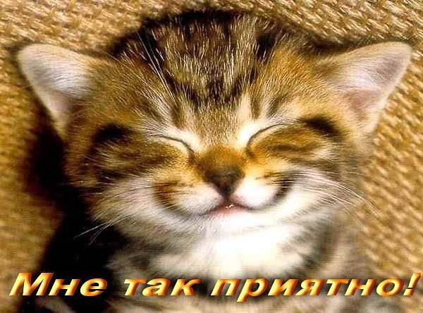 http://images.vfl.ru/ii/1495450257/8e31d854/17311830_m.jpg