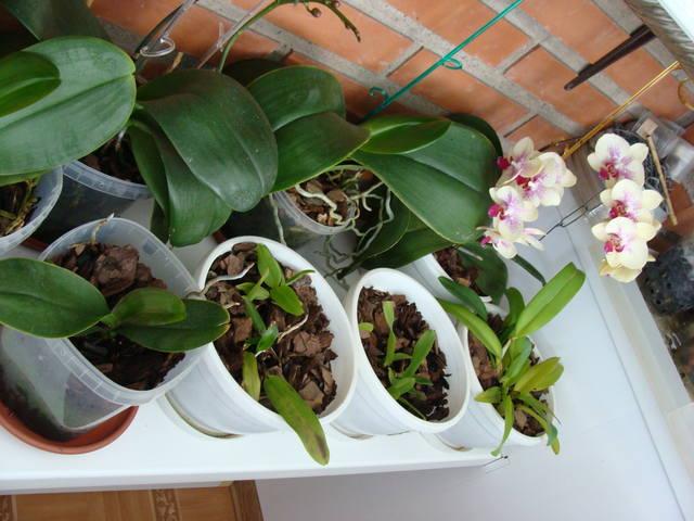 Орхидеи - Страница 16 17344790_m