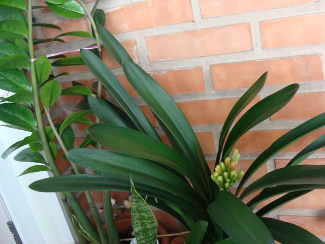 Орхидеи - Страница 16 17344794_m
