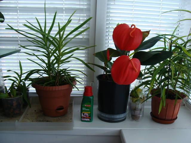 Орхидеи - Страница 16 17344793_m