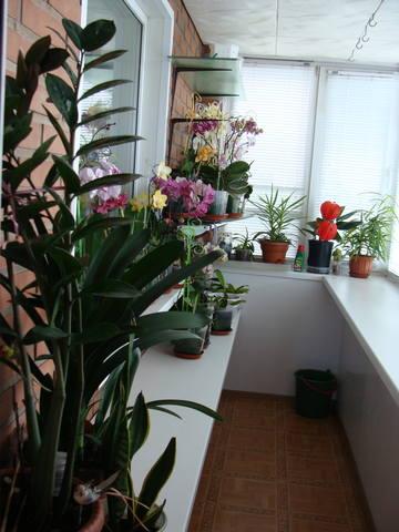 Орхидеи - Страница 16 17344796_m