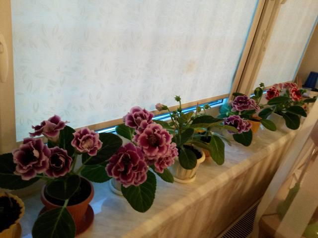 http://images.vfl.ru/ii/1495912237/21bfa5c5/17371942_m.jpg