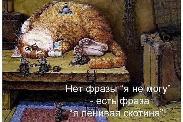 http://images.vfl.ru/ii/1496173187/038c5b5f/17405840_m.jpg