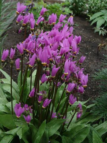 Весенне цветущие - Страница 12 17407878_m