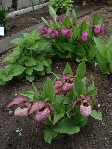 Весенне цветущие - Страница 12 17407879_m