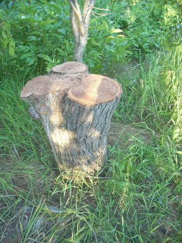 http://images.vfl.ru/ii/1496469671/cd948c20/17444298_m.jpg
